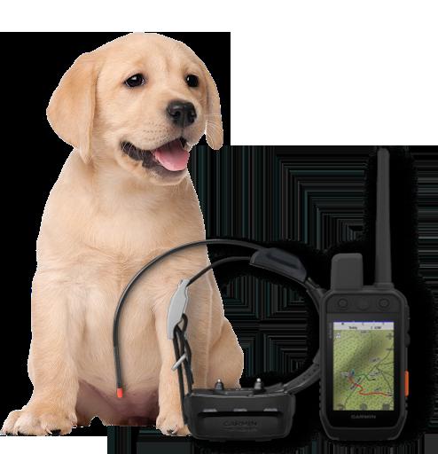 Garmin Dog Tracker